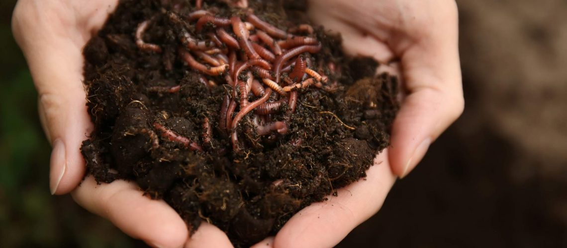 Harnessing the power of earthworm castings